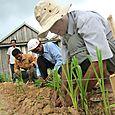 planting forage grasses